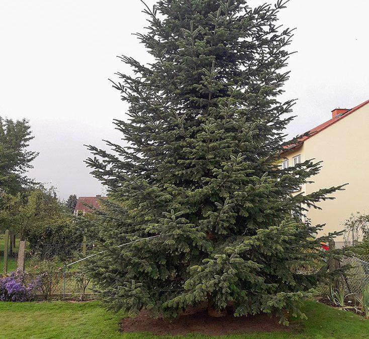 Projekt Weihnachtsbaum 2020