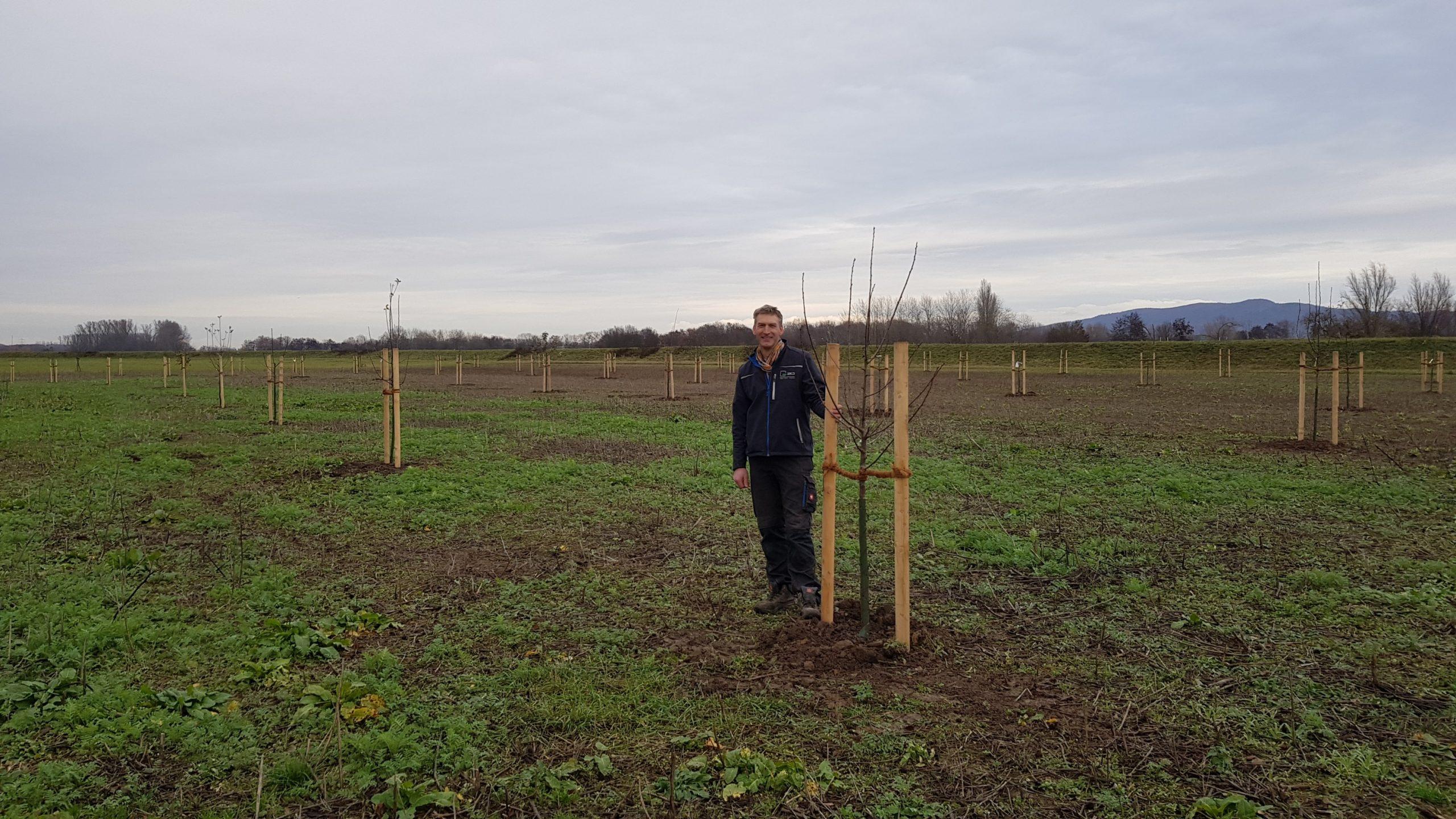 Bepflanzung Der Ausgleichsflächen Durch Den ZKD